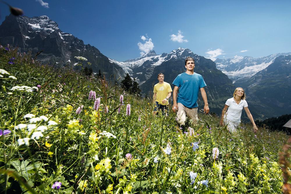 Bergfrühling Grindelwald